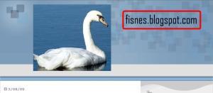 """esta es la pagina de fisnes.blogspot.com si les gusta """"gorilas"""",""""iron maden"""",""""metalica""""y club penguin vayan a esa pagina."""